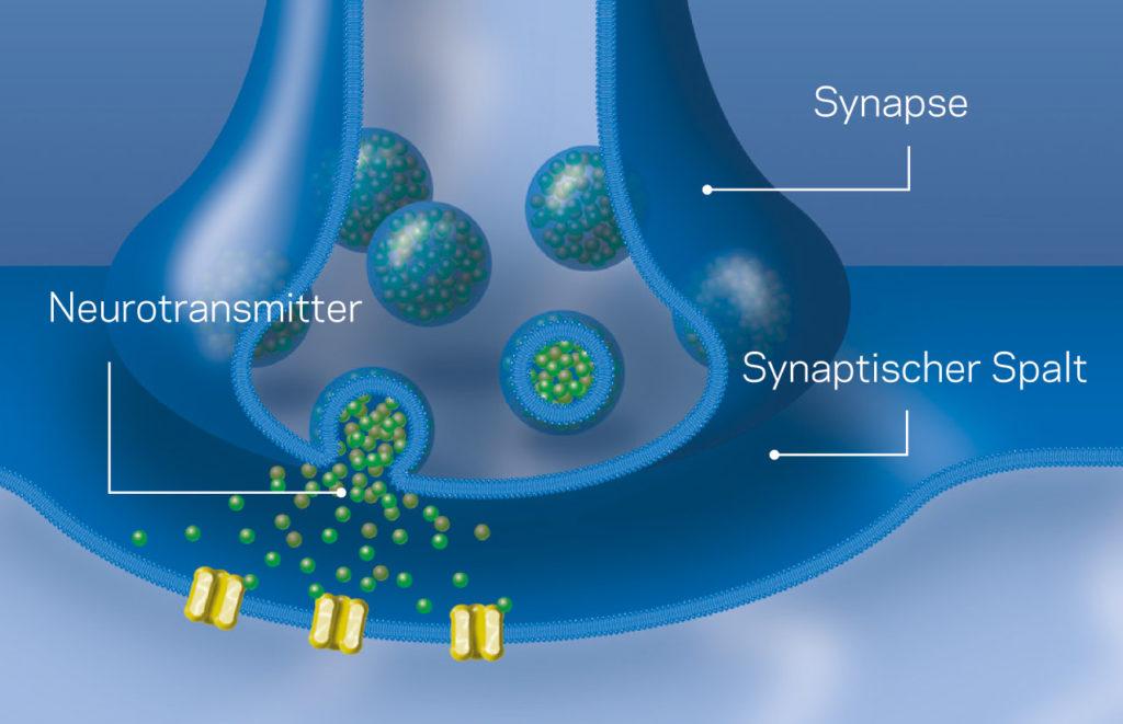 Informationsübertragung an der Synapse